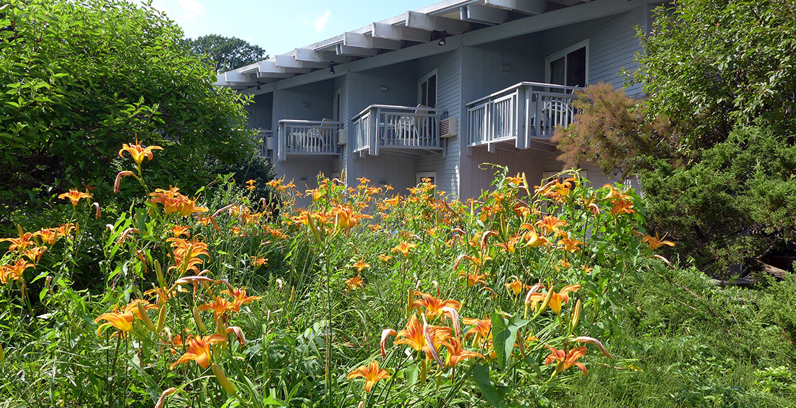 balconies and tiger lillies